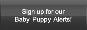 Sign up for our Baby Puppie Alerts!